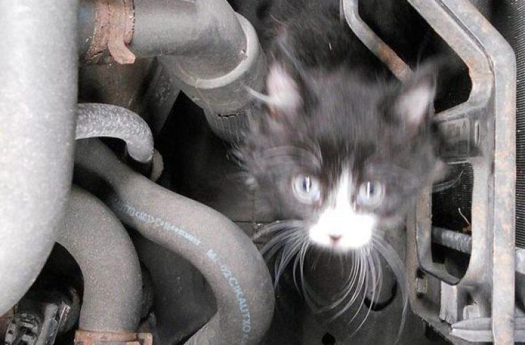 Kitten survives 4 mile trip in engine bay