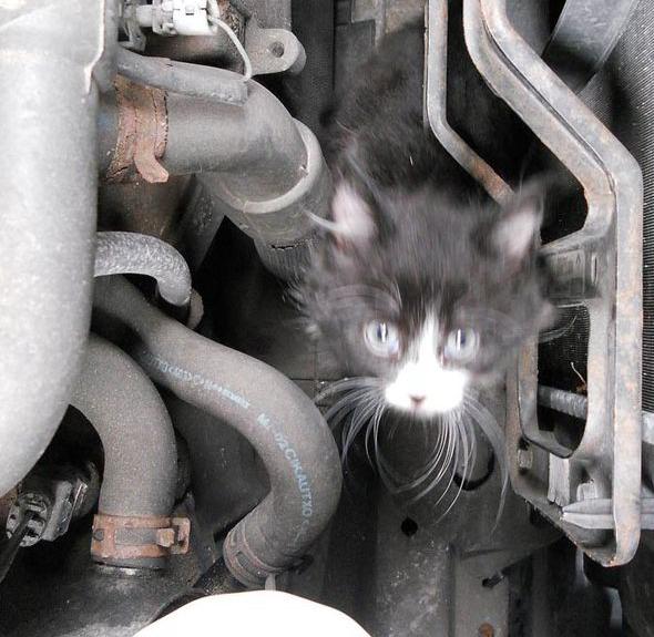 kitten survives 4 mile trip in engine bay   garagewire