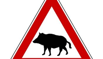 M4 wild boar crash may lead to new road sign