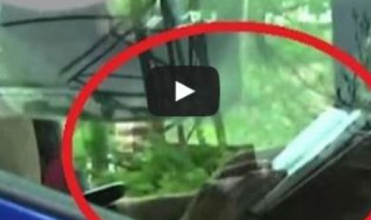 Video: Lorry driver caught reading book on motorway