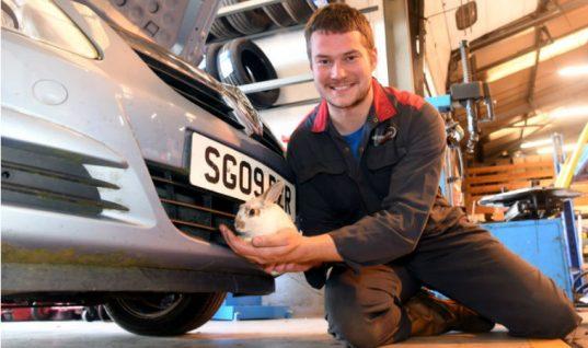 Video: Technician finds live rabbit inside car bonnet during MOT