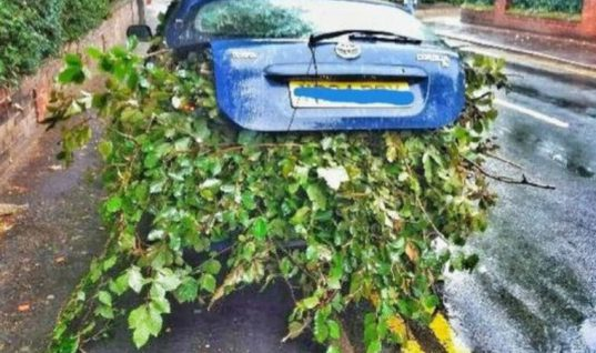"""Absolute madness"" as driver stuffs car with branches"