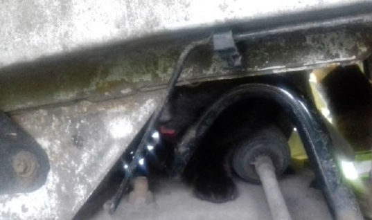 Three mechanics and fire service called in to help save cat from engine bay