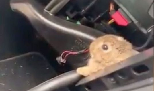 Rabbit pulled from behind dashboard after customer reported 'funny noise'