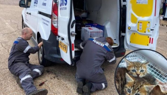 Mechanics called on to help rescue kitten from Cats Protection van